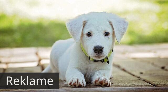 Få et nyt hundebur til din bedste ven