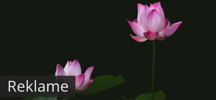 Lotusblomsten, luksuriøs boheme og kraftige farver med bløde former i et smykke
