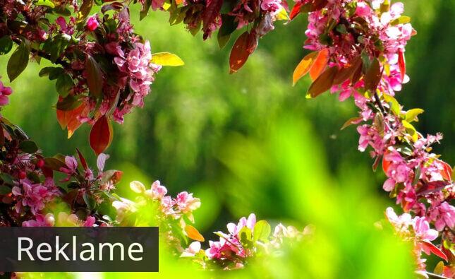 De bedste tips til at blive sommerklar i haven