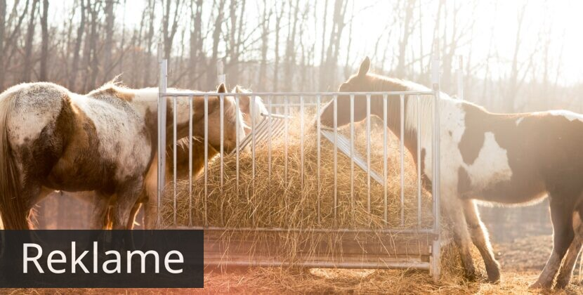 Aveve – hestefoder af høj kvalitet