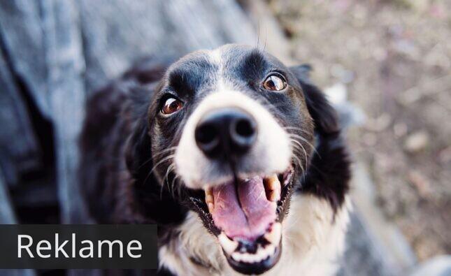 Essential Foods – hundefoder af bedste kvalitet