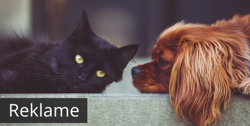 Kan man finde sin dyrlæge online?